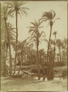 Morocco Marrakech Palmeraie Palm Grove Shepherd Old Photo Felix 1915