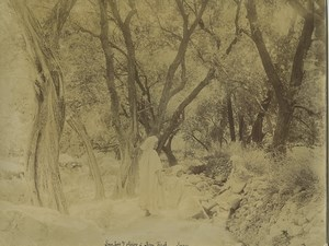 Algeria Olive trees Grove in Beni-Ferah Old Photo Emile Frechon 1900