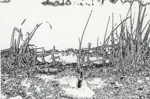 France Fantaisie Photographique Etude Lac? Ancienne Photo Deplechin 1970 #2