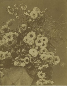 France Still Life Flower bouquet study Old Photo 1870