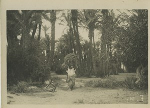 Morocco Marrakech daily life Harvest? Old Photo Felix 1930