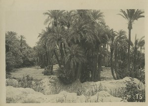 Morocco Marrakech Palm Trees Forest Old Photo Felix 1930