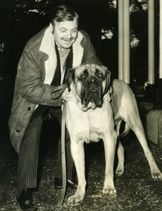 Patrick Wymark English Mastiffs Dog BBC TV Studios Mickleham Press Photo 1965