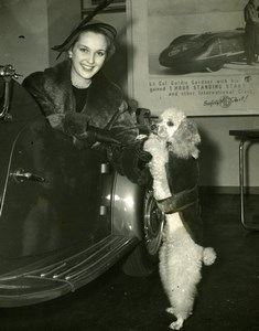 Katie Boyle at Motor Show Fashion Poodle Dog Nuffield Place Old Press Photo 1951