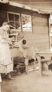 USA or Canada? Lady feeding Deer by Wooden House Old Snapshot Photo 1920