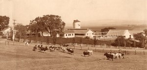 USA California? Countryside Farm & Cattle in Field Old Cheney Photo Adv Co 1920