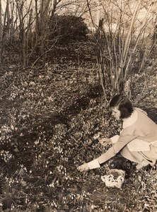 Hampshire Andover Appleshaw Hill House Mrs Rew Snowdrops Old Photo 1936