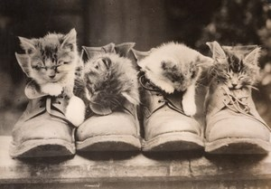 4 Cute Kittens Napping in Army Boots Old Press Photo 1930