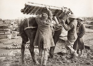 France WWI Western Front Duckboards & Pack-Horses Old Photo 1914-1918