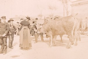 France Angouleme Market Scene Cows Old Photo H Billard 1893