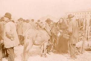 France Angouleme Market Scene Mule Donkey Old Photo H Billard 1893