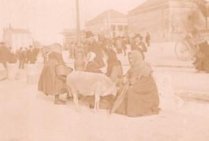 France Angouleme Market Scene Sheep Old Photo H Billard 1893