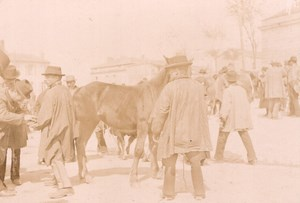 France Angouleme Market Scene Horse Old Photo H Billard 1893