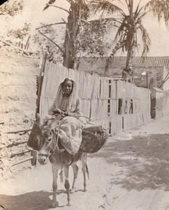 Colombie Santa Marta Femme et son Ane allant au Marche? Ancienne Photo GJ Becker 1910's