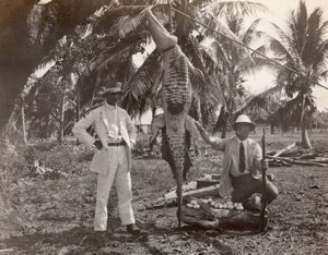 Jamaica ? Crocodile Hunting Trophy Eggs Chasseurs old amateur Photo 1920's