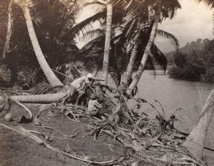 Jamaica ? Hunter Lookout Hunting Palm Trees River old amateur Photo 1920's