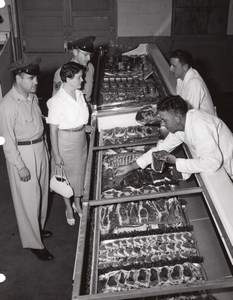 Orlando AFB US Air Force Base Supermarket Butcher Shoppers Old Photo 1960's