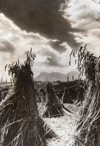 France Wheat? Harvest Agriculture Old Trampus Press Photo 1942