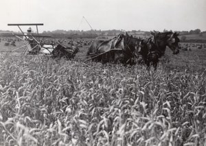 France Wheat Harvest Agriculture Old Trampus Press Photo 1940