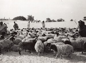 Libya Sheep herd Shepherds near Oasis Drought old Photo 1940's?