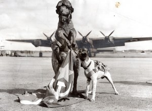 Australia Lincoln Bombing Squadron Mascots Stuffed Kangaroo & Dog old Photo 1952