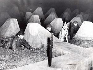 Germany Siegfried Line Awaiting Smugglers Dragon's Teeth old Photo 1953