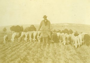 France Haute-Saône Sheep at pasture Shepherd Old Photo Courcelle 1896