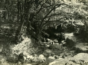 England Lake District Buttermere Forest Stream Old Amateur Photo 1930