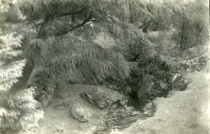 England Lake District Pony Track near Keswick Old Amateur Photo 1930