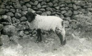 England Lake District Ashness Farm Sheep Old Amateur Photo 1930