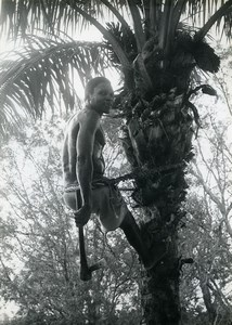 Africa Benin Savalou Save Palm Oil Tree Agriculture Old Photo 1960
