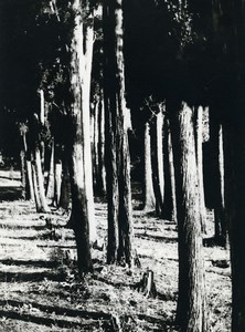Tunisia Carthage Study Forest Trees Landscape Old Photo Leon Lemaire 1935