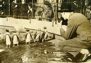 Royaume Uni Photographe au Zoo de Londres Pingouins Ancienne Photo 1920's