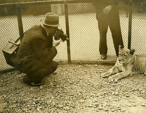 United Kingdom Photographer at London Zoo Lion Lioness Old Photo 1930