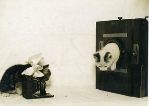 France Cute Kittens Cats Photographers Camera Old Photo 1920's
