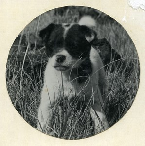 Easter Island Rapa Nui Orongo Puppy Old Francis Maziere Photo 1965