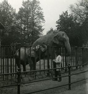 Germany Hamburg Zoological Garden Elephant Old NPG Stereoview Photo 1900