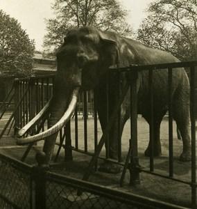 Germany Hamburg Zoological Garden Anton Old NPG Stereoview Photo 1900