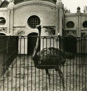 Germany Hamburg Zoological Garden Ostrich Old Photo Stereoview NPG 1900