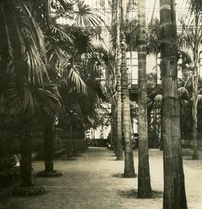France Paris Snapshot Acclimatation Garden old NPG Stereo Photo 1900