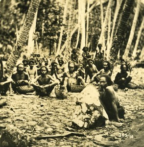Caroline Islands Coconuts Crops Old Stereo Photo Kurt Boeck 1900