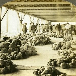 USA Floride Key West Sponge Market old Griffith Stereo Photo 1900