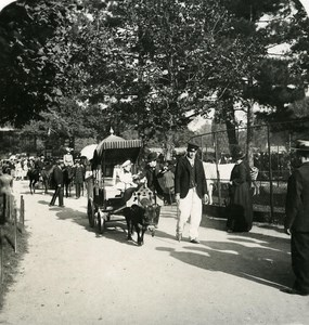 France Paris Zoo Donkey Car Old NPG Stereo Photo 1900