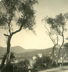 Italy Liguria Riviera Rapallo Zoagli Road Old NPG Stereo Photo 1900