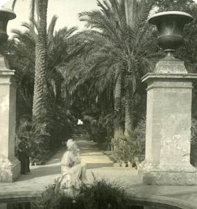 Italy Sicily Palermo Palm garden Old NPG Stereo Photo 1900