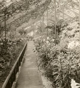 United Kingdom London Kew Royal Botanical Gardens Old Rotary Stereo Photo 1900