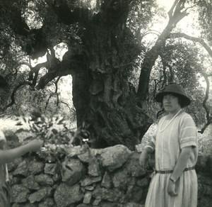 France Corse Environs d Ile Rousse ancienne photo stereo Amateur 1920