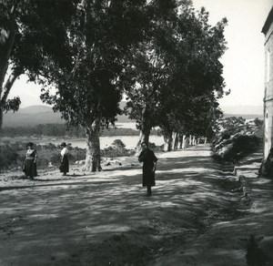 France Corse Porto Vecchio les eucalyptus ancienne photo stereo Amateur 1920
