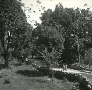 France Corse San Gavino Bois de Genevriers ancienne photo stereo Amateur 1920