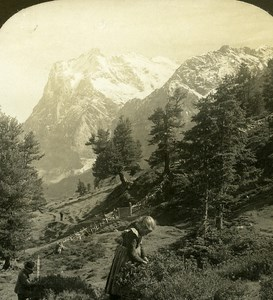 Switzerland Children Mountain Pasture Wetterhorn Old Stereo Photo ASC 1900